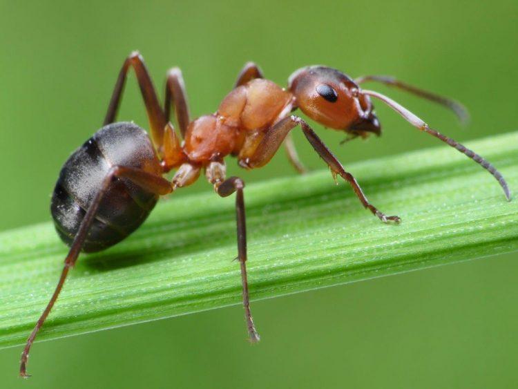 قريباً .. النمل مصدر للأدوية!
