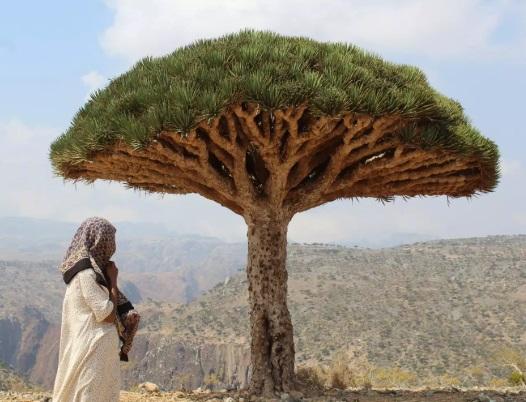 جزيرة سقطرى: الجوهرة العربية المحمية من اليونسكو والمختفية وسط الحرب الأهلية في اليمن