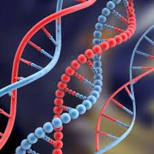باحث في العلوم الجينية يؤكد أنه لا وجود لشعوب أصلية