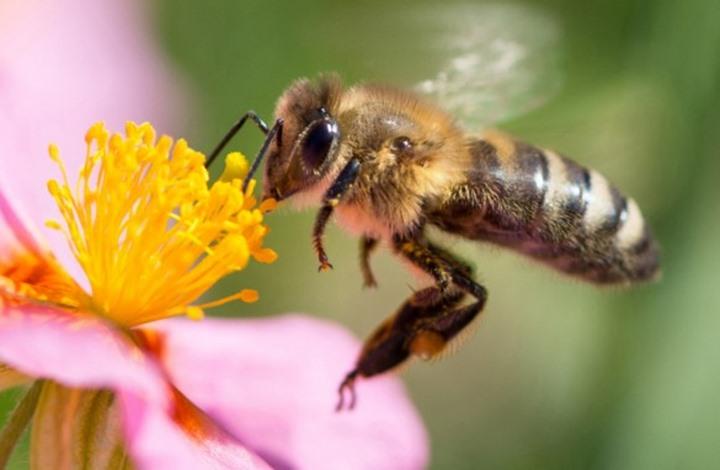 هل تعلم أن موت الحشرات يهدد حياتنا؟