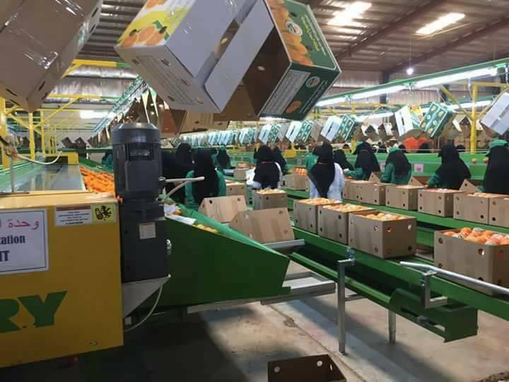 المحافظ سلطان العرادة يفتتح أول مصنع في مأرب وبكادر نسائي (صور)
