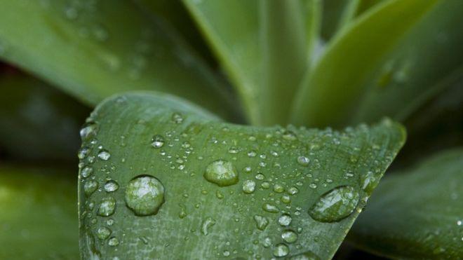 ما هو السر في الرائحة الطيبة للمطر؟