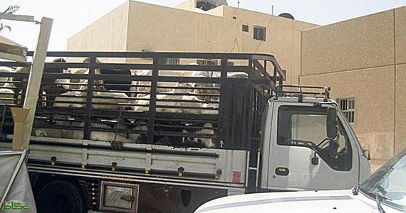 مسلحون يقومون بنهب شاحنة محملة بالأغنام في الضالع