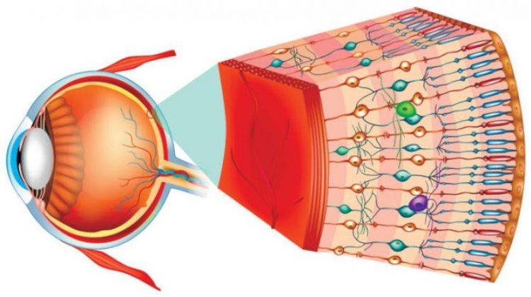 يامل الباحثون في علاج الانسان.. علاج جيني يعيد البصر لفئران عمياء