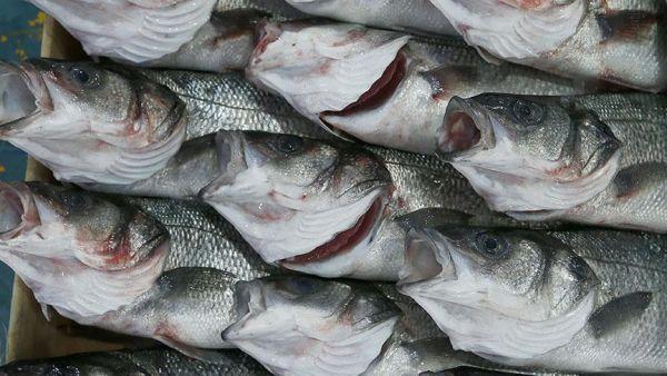 تناول الأسماك بكثرة خلال الحمل يعزز نمو الدماغ لدى الأطفال (دراسة)