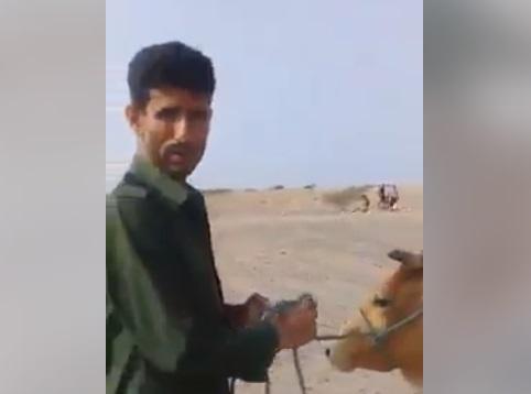 ابو اليمامة يظهر في فيديو ينهب البقرة التي تبرعت بها عجوز من يافع بداية الحرب لدعم المقاومة
