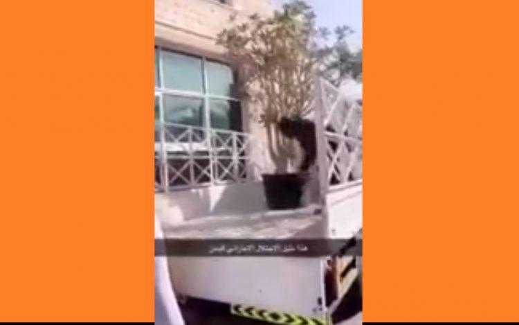 شاهد بالفيديو.. رجل إماراتي يعترف بسرقة أشجار سقطرى ونقلها الى الامارات