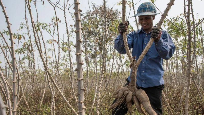 الطفيليات التي أنقذت المزارعين والمحاصيل الزراعية قبل اكتشاف المبيدات