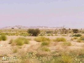 قوات الجيش تحرر مواقع جديدة في الجوف وتقترب من بوابة معسكر اللبنات