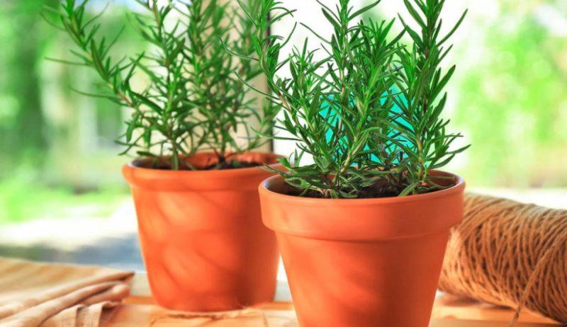بالصور.. تعرف على النباتات التي تحسن المزاج