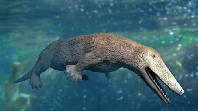 مثل طفرة لعلماءالحفرياتالعرب.. اكتشاف حوت برمائي عاش في مصر قبل 43 مليون عام